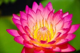 BI BUA Traditional Thai Massage LE5 Leicester