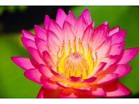 BUA Traditional Thai Massage LE5 Leicester