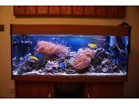 MARINE FISH TANK AQUARIUM - Live rock - 35kg