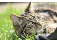 Female Tabby cat needs a new home.