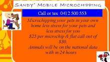 microchipping your puppies, dogs, cats. kittens Maddington Gosnells Area Preview