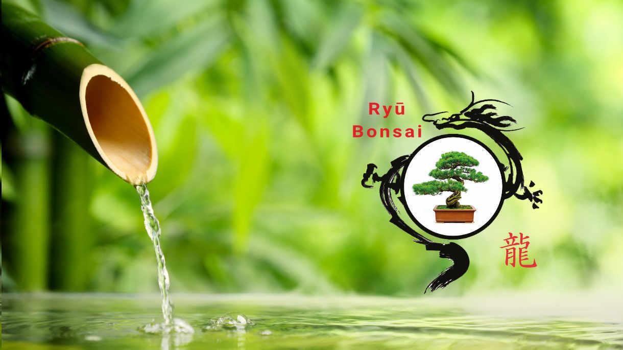 Ryu Bonsai