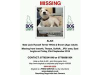 ALAN MISSING DOG JRT