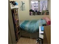 Single Room in Three Bed Flatshare