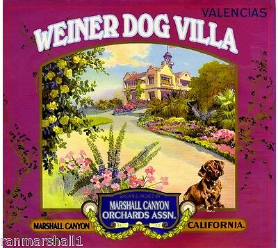 Marshall Canyon Weiner Dachshund Dog Orange Citrus Fruit Crate Label Art Print