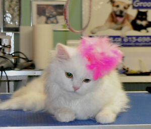 OTTAWA DOG AND CAT GROOMING - CERTIFIED - HOME BASED