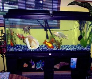 60 gal tank, stand, fluval canister filter, lights, everything