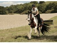 Fantastic Horse Riding opportunity based in Arborfield