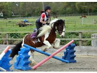Horses & Ponies available for part/loan Share in Arborfield