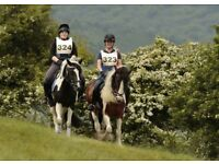Fantastic horse riding opportunity available in Arborfield - Berkshire