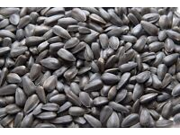 12.55kg black sunflower seeds