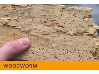 Pest Control - Woodworm, Death Watch Beetle, fleas and Bed Bugs