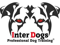 Professional Dog Training Boot Camps