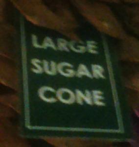 Large Sugar Pine Cones Xmas