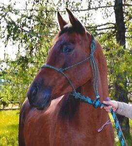 Registered Arabian mare