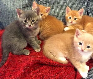 Cute and playful kittens are ready to go to a forever home!!