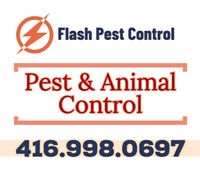 BEDBUG COCKROACH MOUSE RAT ANIMAL TREATMENT REMOVAL PEST CONTROL