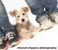 WORKSHOP -  MASTERING THE BUSINESS OF PET PHOTOGRAPHY!