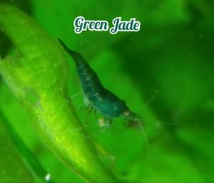 Fish, shrimp, plants, snails,+ more