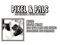 Pixel & Pals Dog Walking, Sitting & Boarding in Fulham