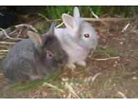 New born baby rabbits