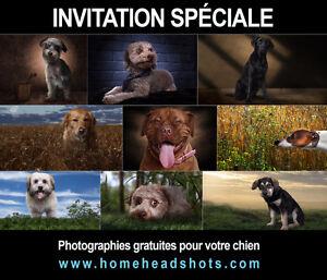 Photos professionnelles sans frais / Portfolio de chiens