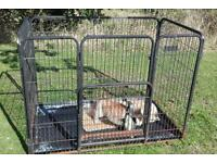 Dog/Puppy/Small Animal Cage/Crate/Kennel/Pen