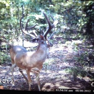 an analysis of the hunting of the white tail deer in the united states oklahoma Management will impact the future of deer hunting the goal of this  genetics  research on captive white-tailed deer at mississippi state university.