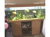 5ft fish tank aquarium full set up
