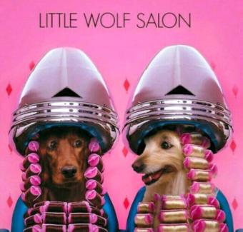 Little wolf doggy salon