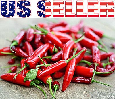 Mexican Pepper - 50+ ORGANICALLY GROWN Serrano Chili Hot Pepper Seeds Heirloom NON-GMO Mexican