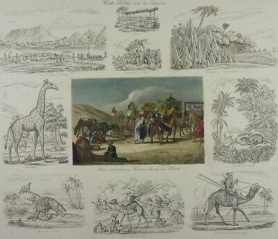 AFRIKA SAHARA DROMEDAR GIRAFFE BEDUINE WÜSTE NIGER STICH 1850 AFRICA E12