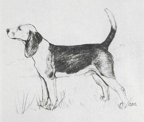 Beagle - 1945 Vintage Dog Art Print - G. Cook