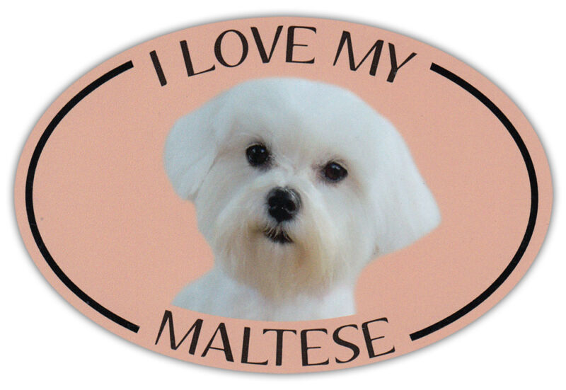 Oval Dog Breed Picture Car Magnet - I Love My Maltese - Bumper Sticker Decal