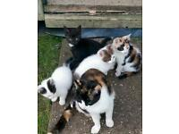 5 beautiful kittens ready for re homing