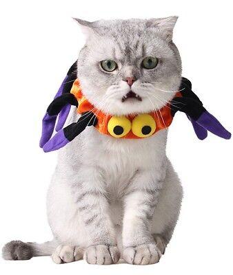 Haustier Junge Mädchen Hund Katze Orange Kürbis Halloween Kostüm Outfit (Junge Hund Halloween-kostüme)