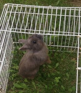 Adorable bunny for sale