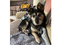 Dogsitter or dog boarder (July 23 - Aug 9)