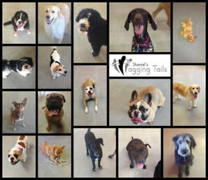 Puppy/Manners Classes