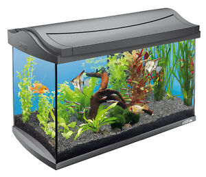 I WILL TAKE YOUR UNWANTED FISH TANKS (PICKUP INCLUDED)