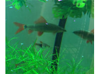 Two shark fish for sale