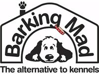 Dog care in your home from time to time