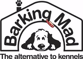 Dog care in your home now and then
