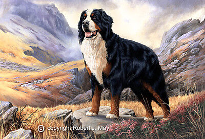 Bernese Mountain Dog Limited Edition Giclee Print