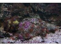 Marine Fish Tank (200 litres, 40cm, 50cm) for sale £350 ONRO