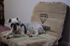 lux dog bed - diy project