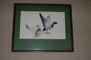 Mallard Duck Print in Frame