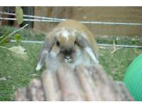 Rabbit free to a good home