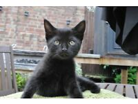 Adorable black kitten needs a new home!!!!