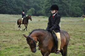 12hh Beautiful mare